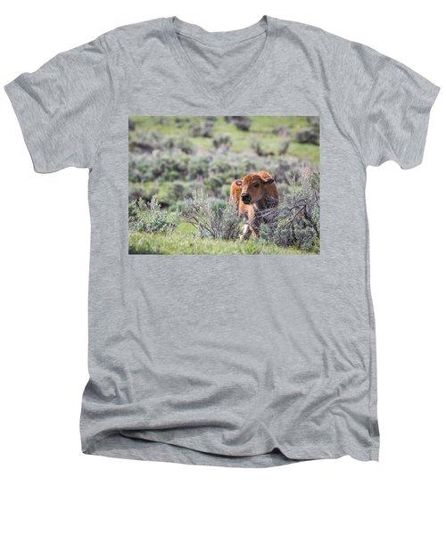 Bison Calf Men's V-Neck T-Shirt