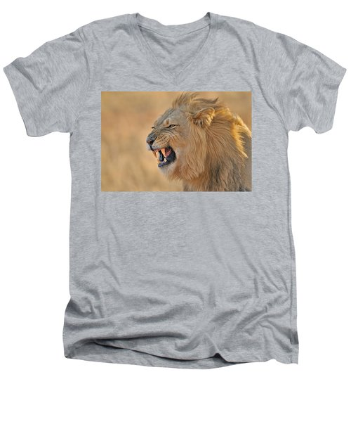 120118p081 Men's V-Neck T-Shirt by Arterra Picture Library