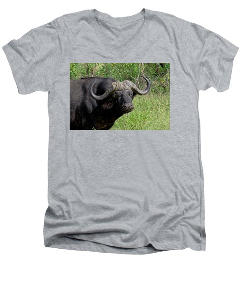 Cape Buffalo Men's V-Neck T-Shirt by Tony Murtagh