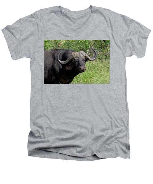 Cape Buffalo Men's V-Neck T-Shirt