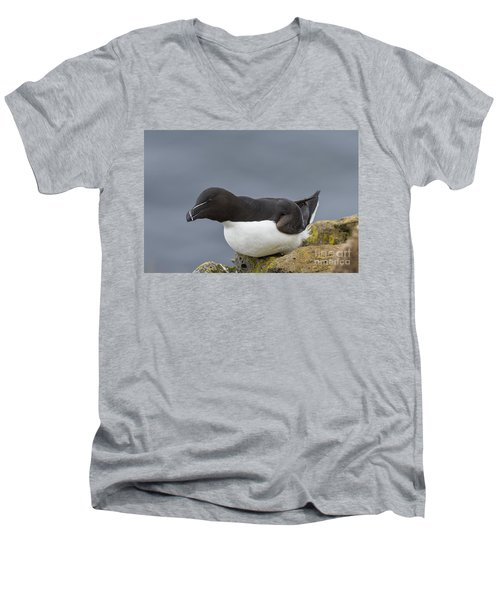 Razorbill Men's V-Neck T-Shirt