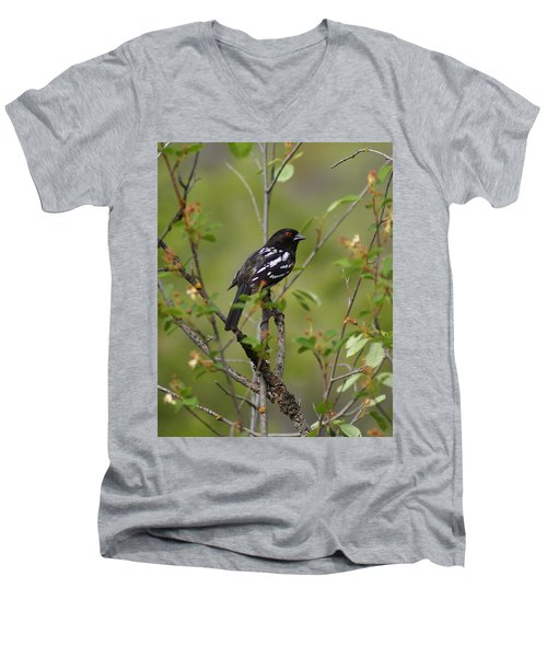 Spotted Towhee Men's V-Neck T-Shirt