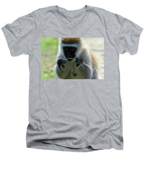 Vervet Monkey Men's V-Neck T-Shirt
