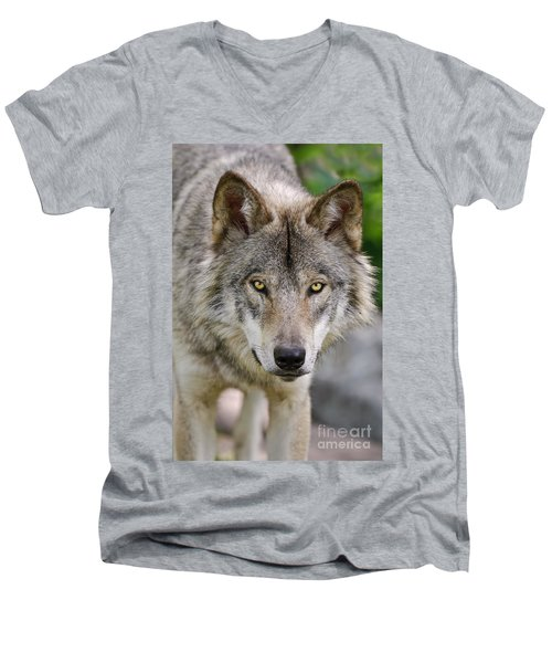 Timber Wolf Pictures Men's V-Neck T-Shirt