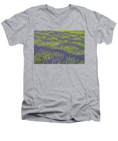 Lavendar Field Rows Of White And Purple Flowers Men's V-Neck T-Shirt
