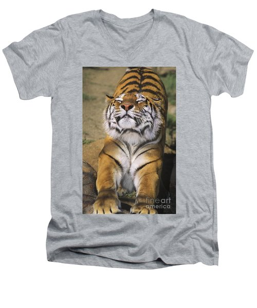 A Tough Day Siberian Tiger Endangered Species Wildlife Rescue Men's V-Neck T-Shirt by Dave Welling