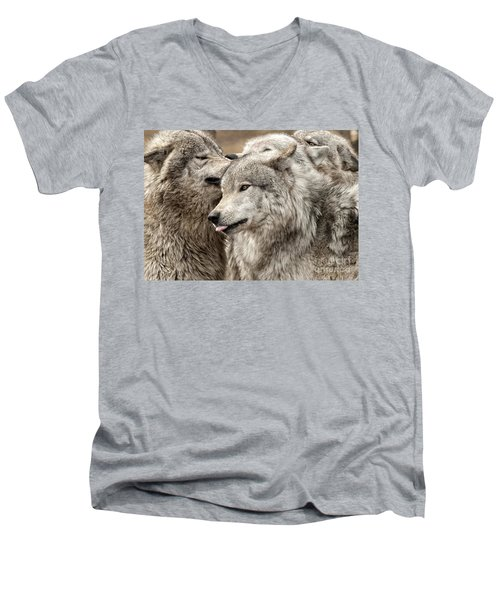Men's V-Neck T-Shirt featuring the photograph Adult Timber Wolf by Wolves Only