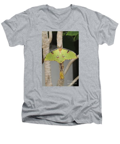 African Moon Moth Men's V-Neck T-Shirt