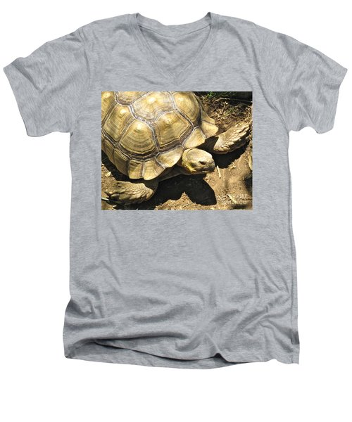 African Spurred Tortoise Men's V-Neck T-Shirt by CML Brown