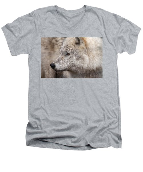 Arctic Wolf Men's V-Neck T-Shirt