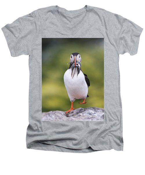 Atlantic Puffin Carrying Greater Sand Men's V-Neck T-Shirt by Franka Slothouber