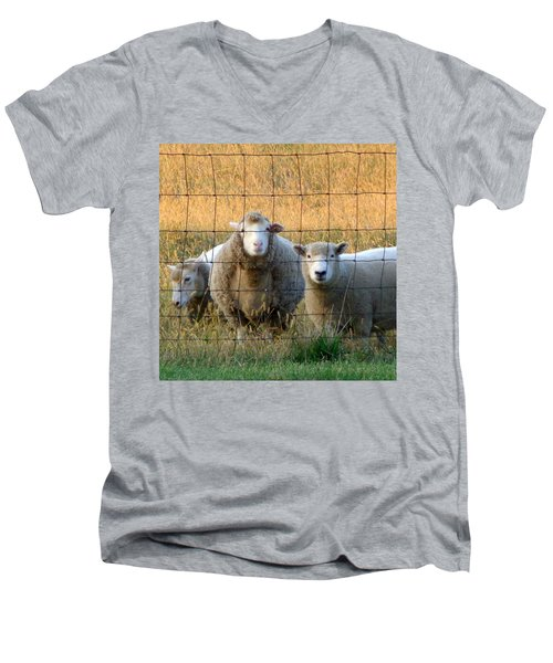 Men's V-Neck T-Shirt featuring the photograph Baaaaa by Joseph Skompski