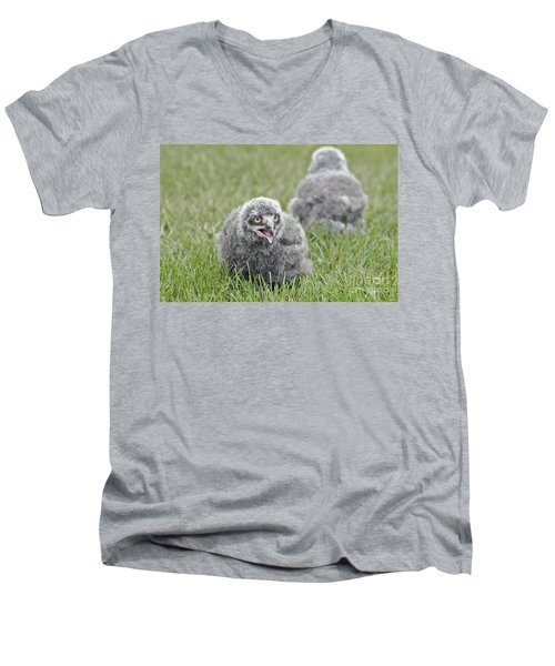 Baby Snowy Owls Men's V-Neck T-Shirt