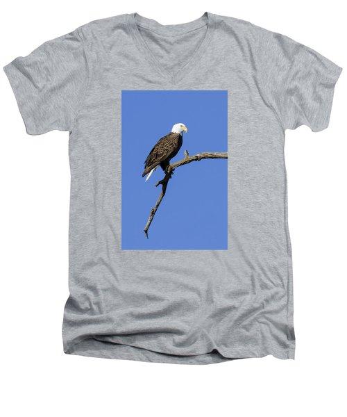 Bald Eagle 4 Men's V-Neck T-Shirt by David Lester