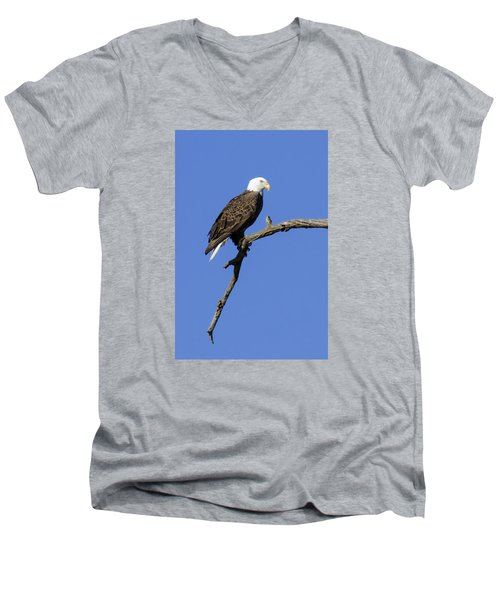 Bald Eagle 4 Men's V-Neck T-Shirt