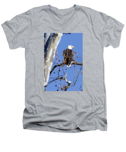Bald Eagle Men's V-Neck T-Shirt by David Lester