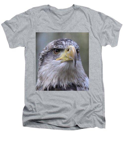 Bald Eagle - Juvenile Men's V-Neck T-Shirt