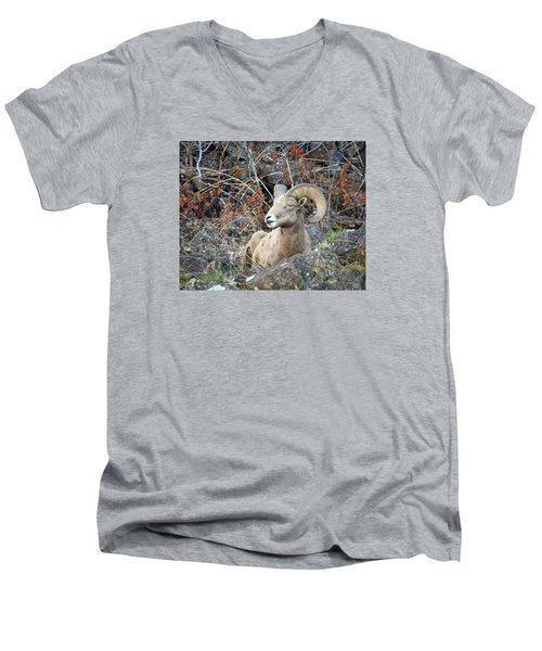 Men's V-Neck T-Shirt featuring the photograph Bedded Bighorn by Steve McKinzie