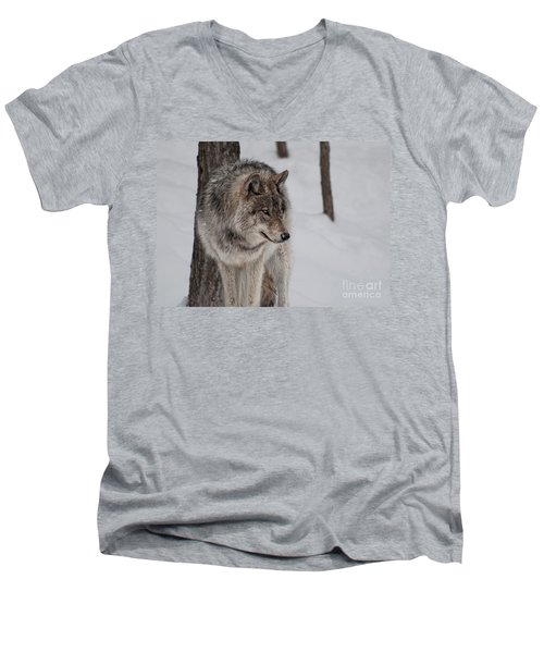 Men's V-Neck T-Shirt featuring the photograph Big Bad Wolf by Bianca Nadeau