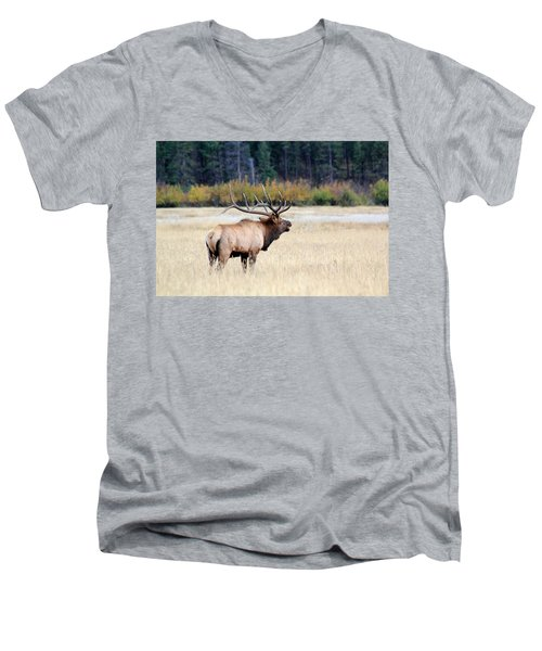 Men's V-Neck T-Shirt featuring the photograph Big Colorado Bull by Shane Bechler
