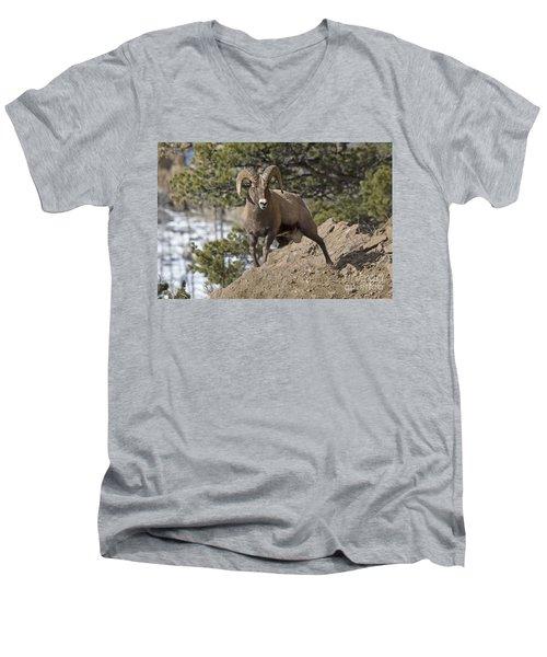 Big Horn Ram Men's V-Neck T-Shirt