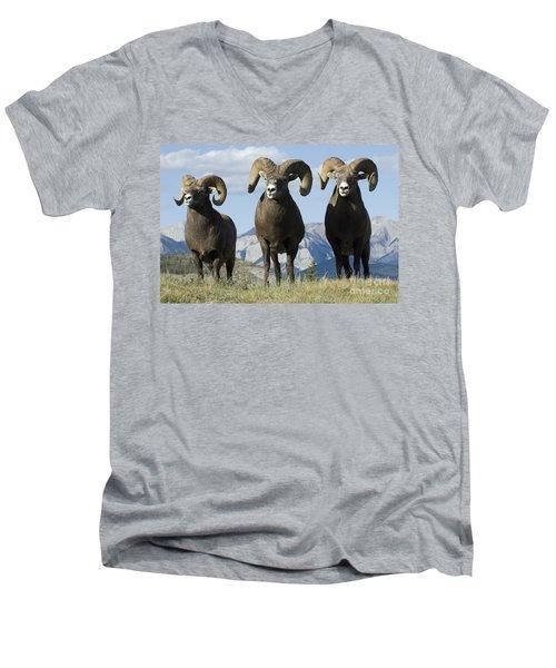 Big Horn Sheep Men's V-Neck T-Shirt by Bob Christopher