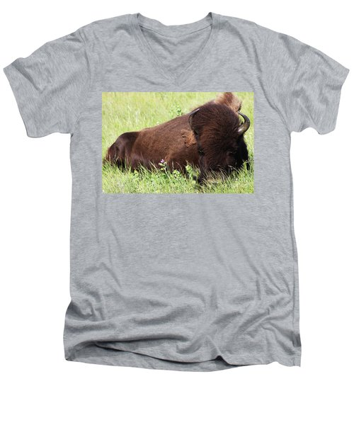 Bison Nap Men's V-Neck T-Shirt