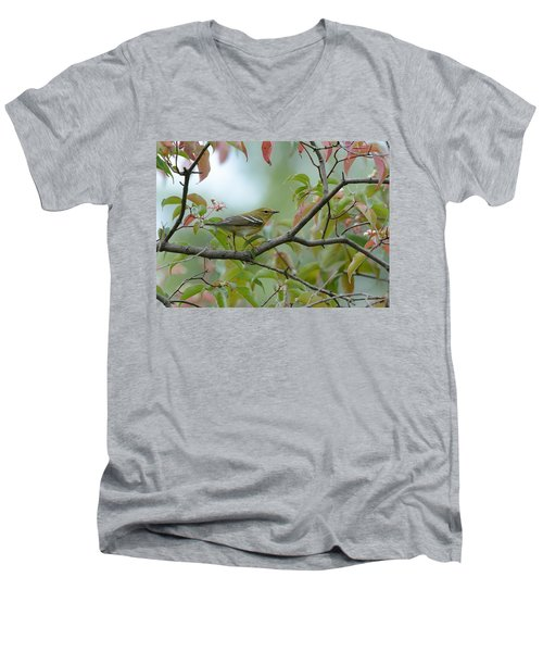 Blackpoll Warbler In The Fall Men's V-Neck T-Shirt