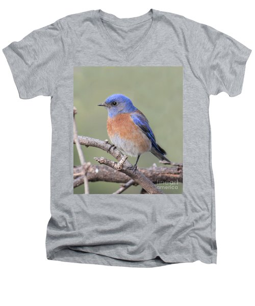 Blue Bird At Sedona Men's V-Neck T-Shirt by Debbie Hart