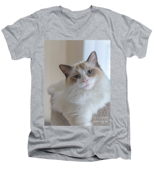 Men's V-Neck T-Shirt featuring the photograph Blue-eyed Ragdoll Kitten by Peta Thames