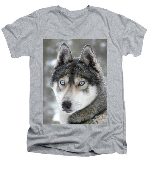 Blue Eyes Husky Dog Men's V-Neck T-Shirt by iPics Photography