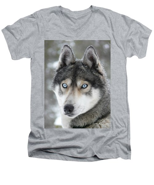 Blue Eyes Husky Dog Men's V-Neck T-Shirt