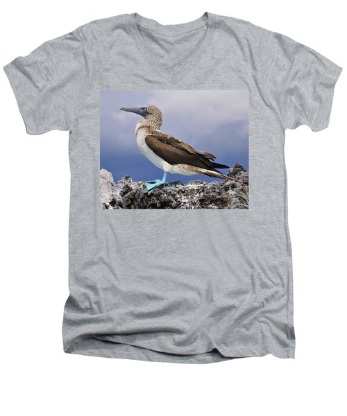 Blue-footed Booby Men's V-Neck T-Shirt by Tony Beck