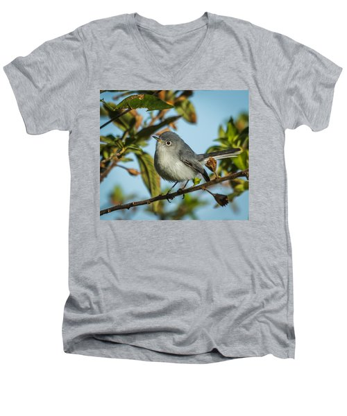 Blue-gray Gnatcatcher Men's V-Neck T-Shirt