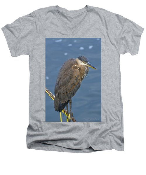 Blue Herron Men's V-Neck T-Shirt