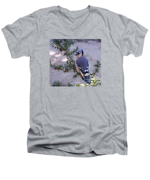 Men's V-Neck T-Shirt featuring the photograph Blue Jay - Morning Visitor  by Susan  Dimitrakopoulos