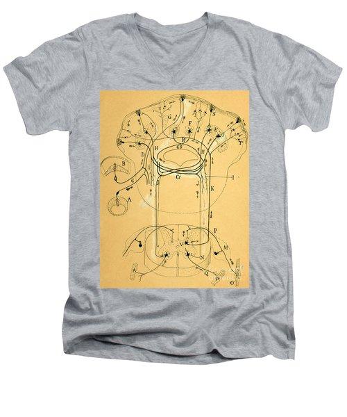 Brain Vestibular Sensor Connections By Cajal 1899 Men's V-Neck T-Shirt by Science Source