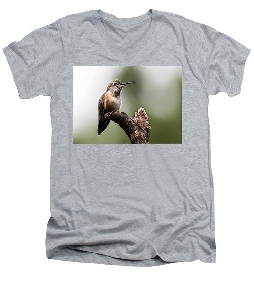 Broad-tailed Hummingbird Sit  Men's V-Neck T-Shirt