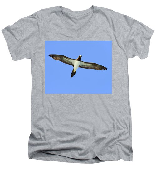 Brown Booby Men's V-Neck T-Shirt by Tony Beck