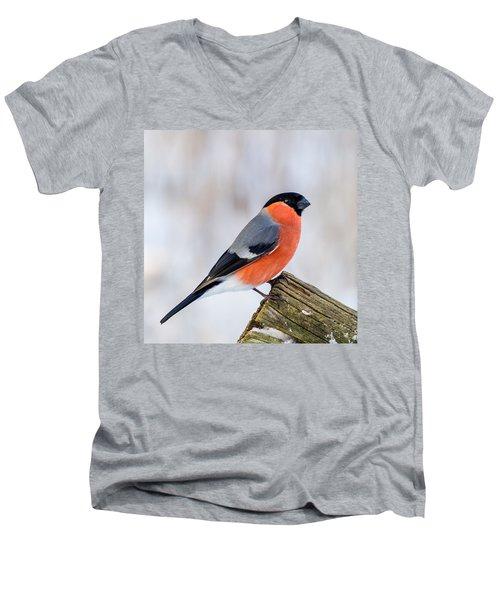 Bullfinch On The Edge Men's V-Neck T-Shirt