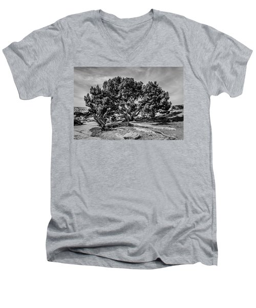 Bw Limber Pine Men's V-Neck T-Shirt