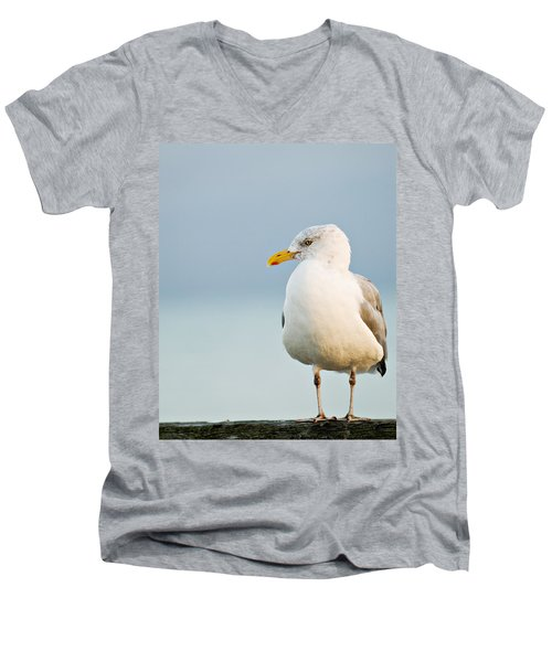 Cape Cod Seagull Men's V-Neck T-Shirt
