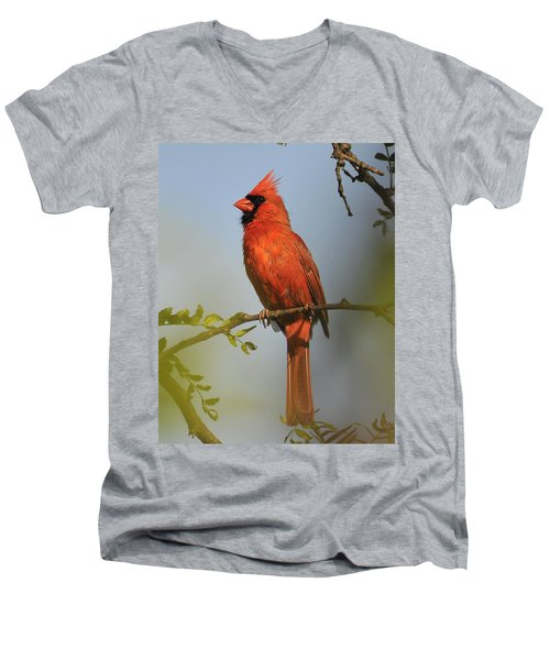 Cardinal 329 Men's V-Neck T-Shirt