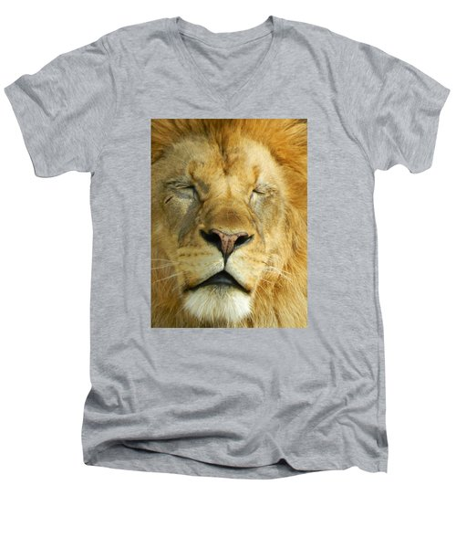 Cat Nap Men's V-Neck T-Shirt by Emmy Marie Vickers
