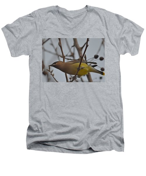 Men's V-Neck T-Shirt featuring the photograph Cedar Waxwing Feasting In Foggy Cherry Tree by Jeff at JSJ Photography