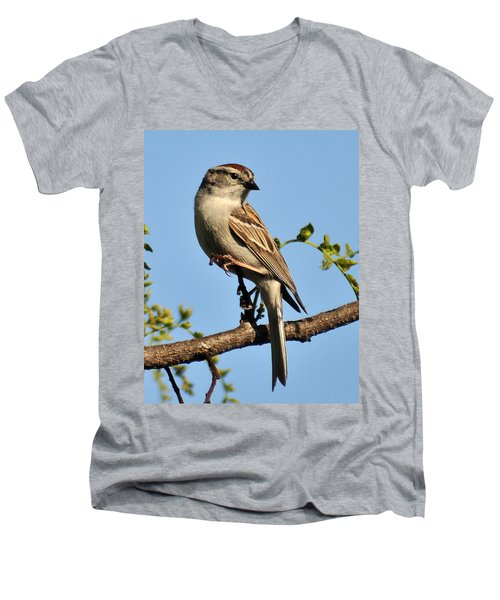 Chipping Sparrow 246 Men's V-Neck T-Shirt