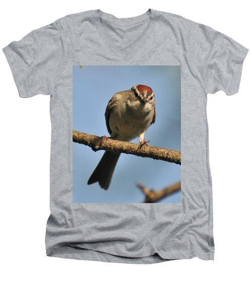 Chipping Sparrow 265 Men's V-Neck T-Shirt