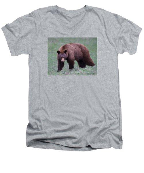 Cinnamon Black Bear Men's V-Neck T-Shirt by CR  Courson
