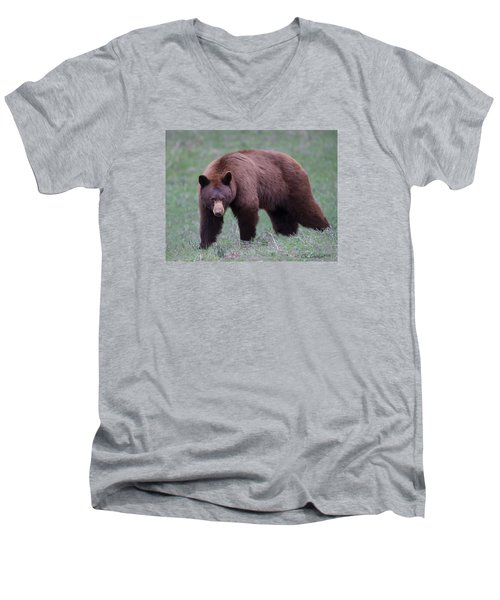 Cinnamon Black Bear Men's V-Neck T-Shirt