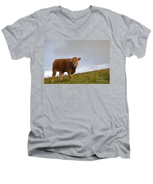 Cliffs Of Moher Brown Cow Men's V-Neck T-Shirt